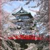 いよいよ【桜の名城】弘前さくら祭り
