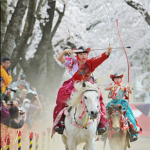 青森・十和田で桜流鏑馬、華麗な演技に歓声!見応えスゴイ!(23日~24日)