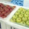 青森・弘前市「葉とらずらずリンゴ」をタイに初出荷!
