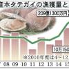 2017「青森県産ホタテ」の販売額・漁獲量とも過去最高!