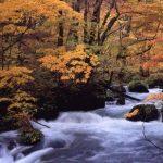 「奥入瀬渓流の紅葉2018」@10月下旬~11月上旬
