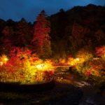 青森県 随一の紅葉の名所「中野もみじ山の紅葉」見頃を迎える!
