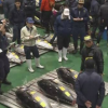 「大間のマグロ」が過去最高値:3億3360万円 豊洲市場で初の初競り!@2019年1月5日