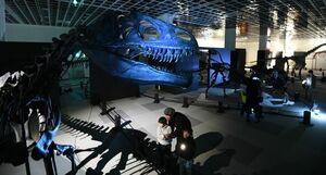 青森「大恐竜展のナイトミュージアム」=大迫力を満喫!